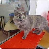 Adopt A Pet :: Billie Jean - El Cajon, CA