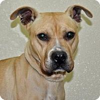 Adopt A Pet :: Sandy - Port Washington, NY