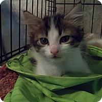 Adopt A Pet :: Joan - Acme, PA