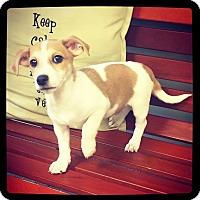 Adopt A Pet :: Petey - Grand Bay, AL