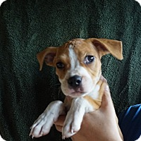 Adopt A Pet :: Dotty - Oviedo, FL