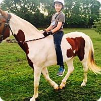 Adopt A Pet :: Fiona - Gallatin, TN