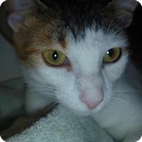 Adopt A Pet :: Lorna - Hamburg, NY