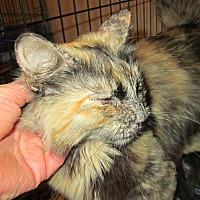Adopt A Pet :: Jewel - San Bernardino, CA