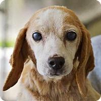 Adopt A Pet :: Freckles - Lincolnton, NC
