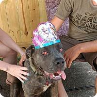 Adopt A Pet :: Thalia - Virginia Beach, VA