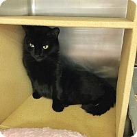 Adopt A Pet :: Nzinga - Colmar, PA