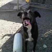 Adopt A Pet :: Mason - Prineville, OR