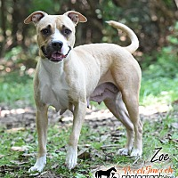 Adopt A Pet :: Zoe - Broadway, NJ