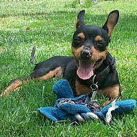 Adopt A Pet :: Timmy - Flossmoor, IL