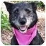Photo 1 - Terrier (Unknown Type, Medium) Mix Dog for adoption in San Diego, California - Melody