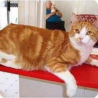 Adopt A Pet :: LEO - El Cajon, CA