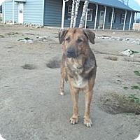 Adopt A Pet :: Nickleby - Southampton, PA