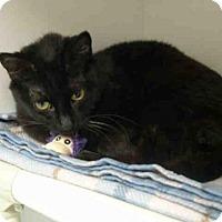 Adopt A Pet :: SHEBA - Tulsa, OK