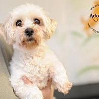 Adopt A Pet :: Anna - Kansas City, MO
