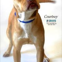 Adopt A Pet :: Courtney - Belle Chasse, LA