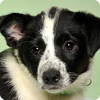 Adopt A Pet :: Quinn - Crossville, TN
