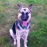 Adopt A Pet :: ARMANI - Sebec, ME