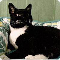Adopt A Pet :: Hope - Medway, MA