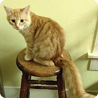 Adopt A Pet :: Traveller - Andover, KS