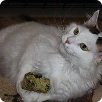 Adopt A Pet :: Vitti - North Branford, CT