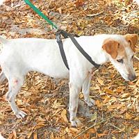Adopt A Pet :: TOMMY - Terra Ceia, FL
