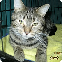 Adopt A Pet :: Belle - Chisholm, MN