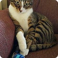 Adopt A Pet :: Brook - Turnersville, NJ