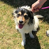 Adopt A Pet :: Barkley - CARISLE, PA
