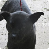 Adopt A Pet :: Durant - Rocky Mount, NC