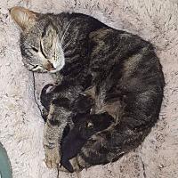 Adopt A Pet :: Marble - Lancaster, CA