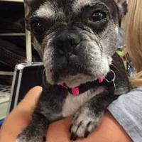 Adopt A Pet :: Fifi - Irmo, SC
