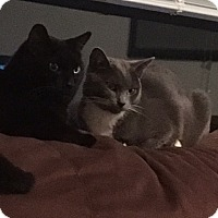 Adopt A Pet :: XP Nicky and Tucker - Rockaway, NJ