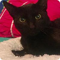 Adopt A Pet :: Steve - Mount Pleasant, SC