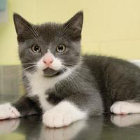 Adopt A Pet :: Milk - Green Bay, WI
