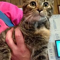 Adopt A Pet :: Bella - Hanna City, IL