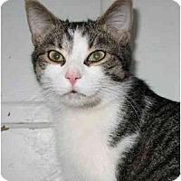Adopt A Pet :: Dickens - Cincinnati, OH