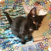 Adopt A Pet :: Catalina - Atlanta, GA