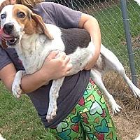 Adopt A Pet :: Tre' - West Hartford, CT
