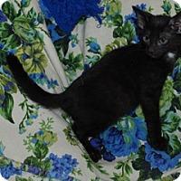 Adopt A Pet :: Mike - St. Louis, MO