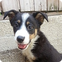 Adopt A Pet :: Henry*ADOPTED!* - Chicago, IL
