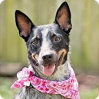 Adopt A Pet :: Jean Grey - Houston, TX