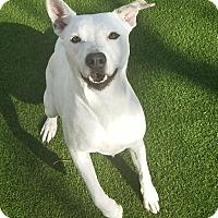 Adopt A Pet :: Natasha - Houston, TX