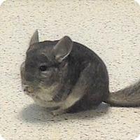 Adopt A Pet :: Monty - Granby, CT