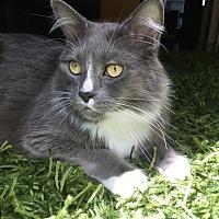 Adopt A Pet :: Tweenie - Vancouver, BC