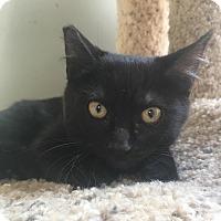 Adopt A Pet :: Jessie bonded w James - Houston, TX