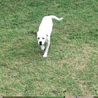 Adopt A Pet :: Hula - Ardmore, OK