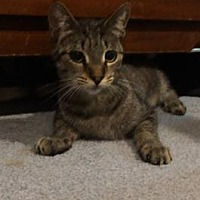 Adopt A Pet :: Kenny - Whitewater, WI