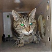 Adopt A Pet :: Missy - Reno, NV