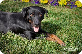 Rottweiler Mix Dog for adoption in Marietta, Georgia - London